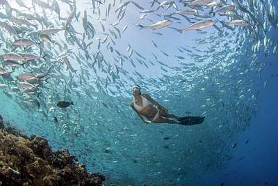 Free Diver In School Of Fish Art Print by Scubazoo