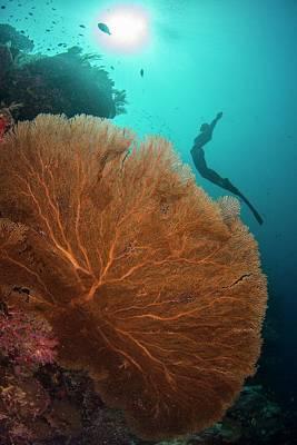 Sea Fan Photograph - Free Diver Swimming Over Sea Fan by Scubazoo