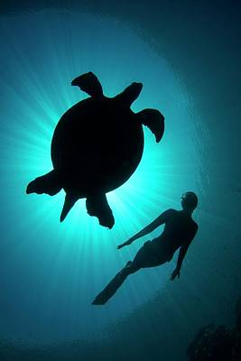 Free Diver With A Turtle Art Print by Scubazoo