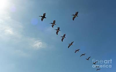 Photograph - Free Flight by Peggy Hughes