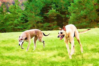 Whippet Digital Art - Free To Roam by John Lynch