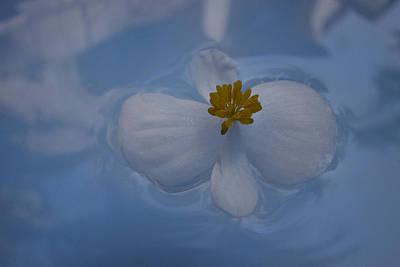 Photograph - Imagination #12 Vm by Viggo Mortensen