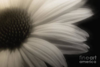 Photograph - Free Will by Jean OKeeffe Macro Abundance Art