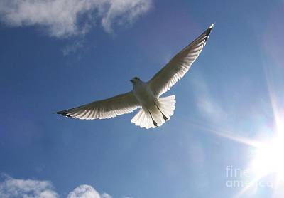 Photograph - Freedom Flight by Jackie Mueller-Jones