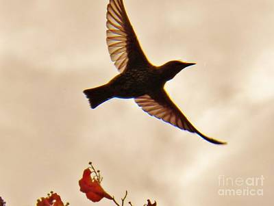 Photograph - Freedom by Judy Via-Wolff