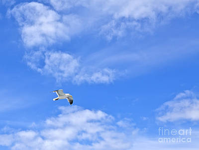 Seagull Photograph - Freedom by Liz Leyden