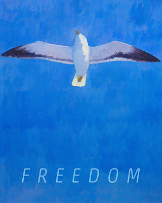 Seagull Mixed Media - Freedom by Lutz Baar