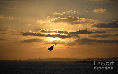 Freedom Art Print by OUAP Photography