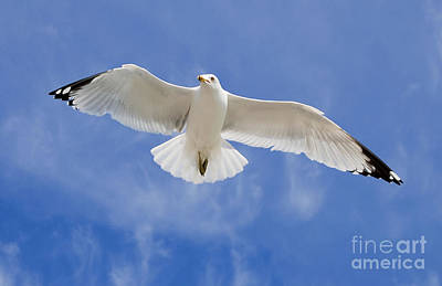 Photograph - Freedom Soar by Gina Savage