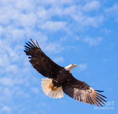 Photograph - Freedom by Ursula Lawrence