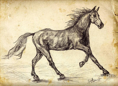 Running Horses Drawing - Freehand Graphite Horse Study by Ginette Callaway