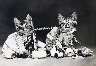 Cat Photograph - Frees Kittens, C1915 by Granger