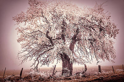 Photograph - Freezing Fog Pink Tree by Wes and Dotty Weber