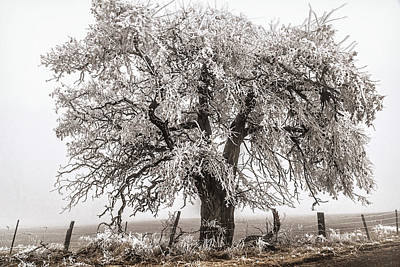 Photograph - Freezing Fog Tree by Wes and Dotty Weber