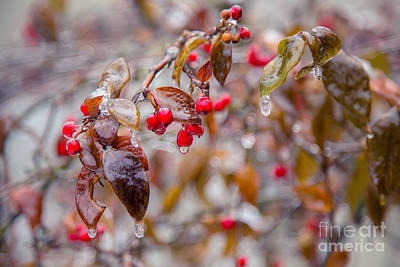 Urban Abstracts - Frozen Winter Berries by Alanna DPhoto