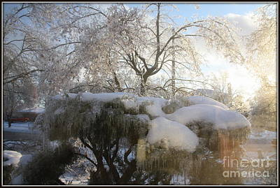 Photograph - Freezing Rain.. by Jolanta Anna Karolska