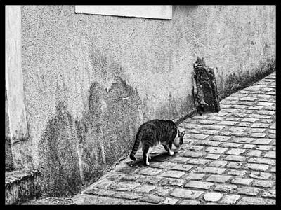Kittie Photograph - French Alley Cat by Menega Sabidussi
