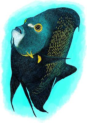 Photograph - French Angelfish by Roger Hall