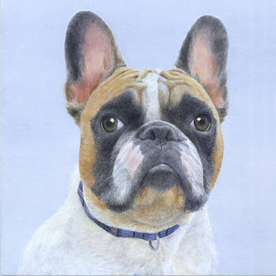 Frenchie Painting - French Bull Dog by Diane Cardaci
