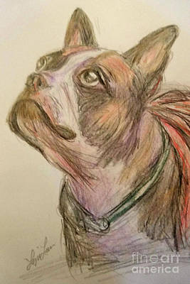 Drawing - French Bull Dog by Lyric Lucas