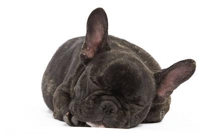 Cute French Bulldog Photograph - French Bulldog by Jean-Michel Labat
