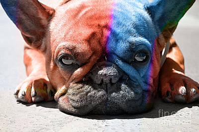Mixed Media - French Bulldog by Marvin Blaine