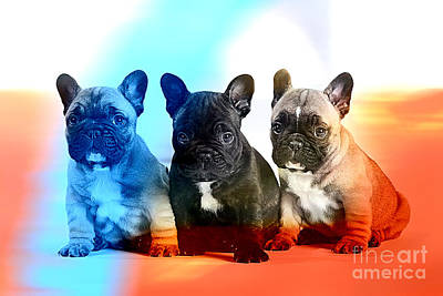 Dogs Mixed Media - French Bulldog Puppies by Marvin Blaine