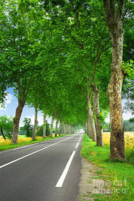 Photograph - French Country Road by Elena Elisseeva