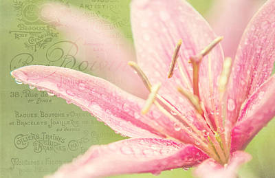 Lilies Royalty-Free and Rights-Managed Images - French Nostalgic Lilies by Jenny Rainbow
