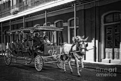 The Who - French Quarter Carriage Ride New Orleans by Kathleen K Parker