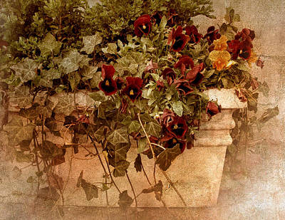 Planter Wall Art - Photograph - Fresco by Jessica Jenney