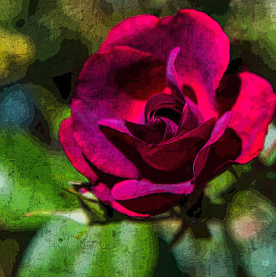 Photograph - Fresco Rose by Chris McKenna