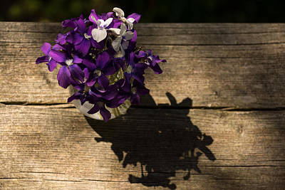 Photograph - Fresh And Perky Spring Violas - Can You Smell Them by Georgia Mizuleva
