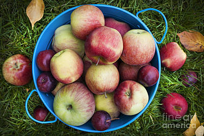 Orchard Photograph - Fresh Apples by Elena Elisseeva
