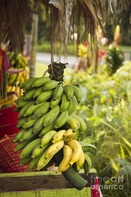 Photograph - Fresh Banana Hana Maui Hawaii by Sharon Mau