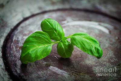 Fresh Basil Print by Mythja  Photography