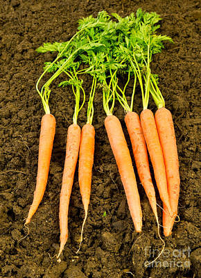 Photograph - Fresh Carrots by Edward Fielding