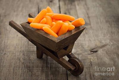 Carrot Wall Art - Photograph - Fresh Carrots In A Miniature Wheelbarrow  by Aged Pixel
