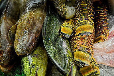 Photograph - Fresh Catch by Olga Hamilton