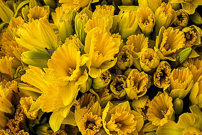 Yellow Daffodils Photograph - Fresh Daffodils  by Garry Gay