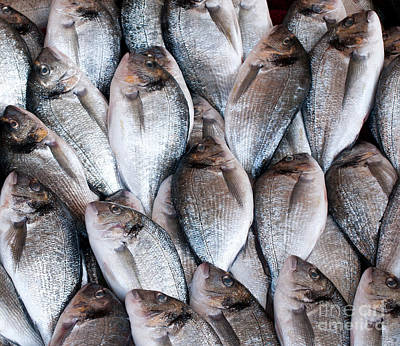 Photograph - Fresh Fish 03 by Rick Piper Photography
