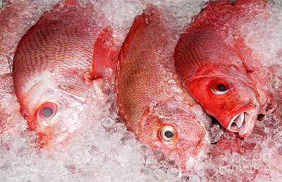 Photograph - Fresh Fish 05 by Rick Piper Photography