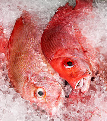 Photograph - Fresh Fish 06 by Rick Piper Photography