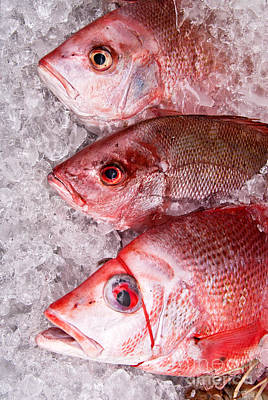 Photograph - Fresh Fish 07 by Rick Piper Photography