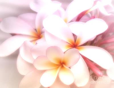 Photograph - Fresh Frangipani by Karen Lewis