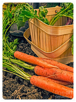 Carrot Photograph - Fresh Garden Vegetables by Edward Fielding