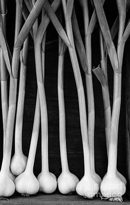 Supermarket Photograph - Fresh Garlic Bulbs Black And White by Edward Fielding