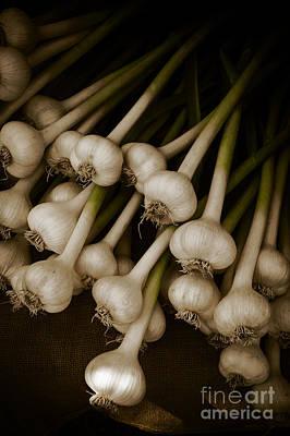 Fresh Garlic Art Print by Edward Fielding