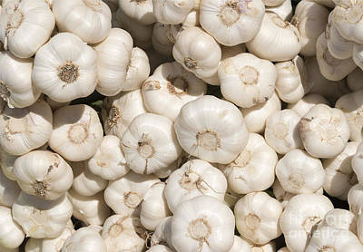 Photograph - Fresh Garlic by Mike  Dawson