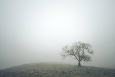 Photograph - Fresh Green And Morning Fog by Alexander Kunz